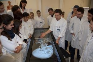 Anatomage Virtual Dissection Touch Table