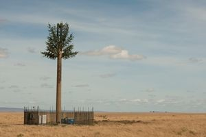 Mobile phone antenna disguised as a tree, Masai Mara Game Reserve, Kenya